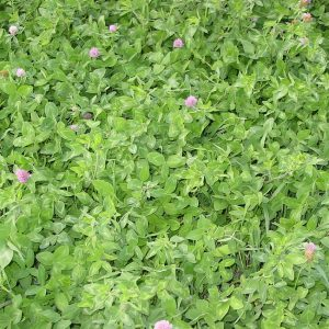 SweetClover-Standish Milling