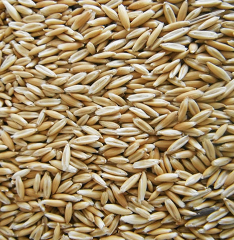 crimped-oats-Standish Milling