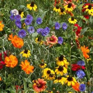 1LB Midwest Wildflower Mix-1593