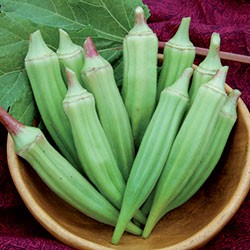Clemson Spineless Okra-1702