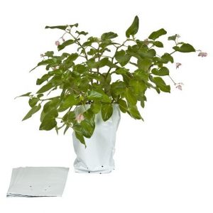 10 Count 3 Gallon Poly Grow Bags-1744