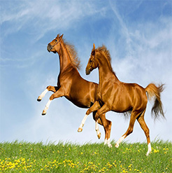 Purina Horse Products